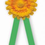 Sdružení dopravních podniků znovu podpoří Květinový den